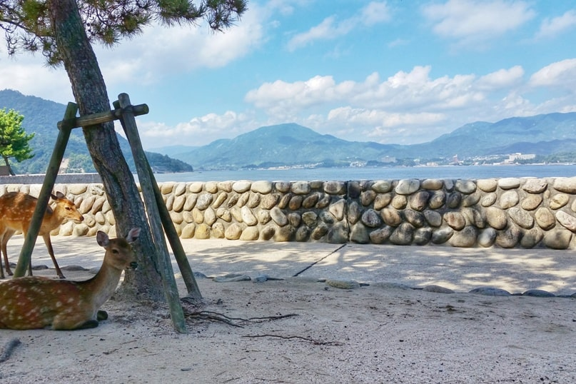 Hiroshima to Miyajima with JR pass: Best things to do in Miyajima for one day trip. Miyajima deer near JR Miyajima ferry station. Backpacking Japan.