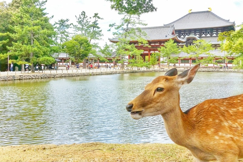 Kyoto to Nara train with JR pass. Day trip to Nara from Kyoto. Best places to visit in Nara in one day. Near deer park. Backpacking Japan.