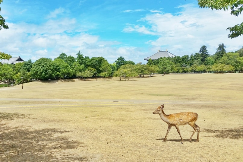 Osaka to Nara train with JR pass. Day trip to Nara from Osaka. Best places to visit in Nara in one day: Deer park. Backpacking Japan.