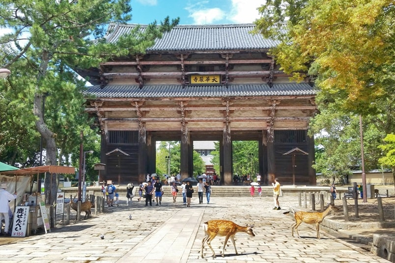 Best UNESCO world heritage sites to visit in Nara. Deer near Todaiji temple at Nara Park. Backpacking Japan
