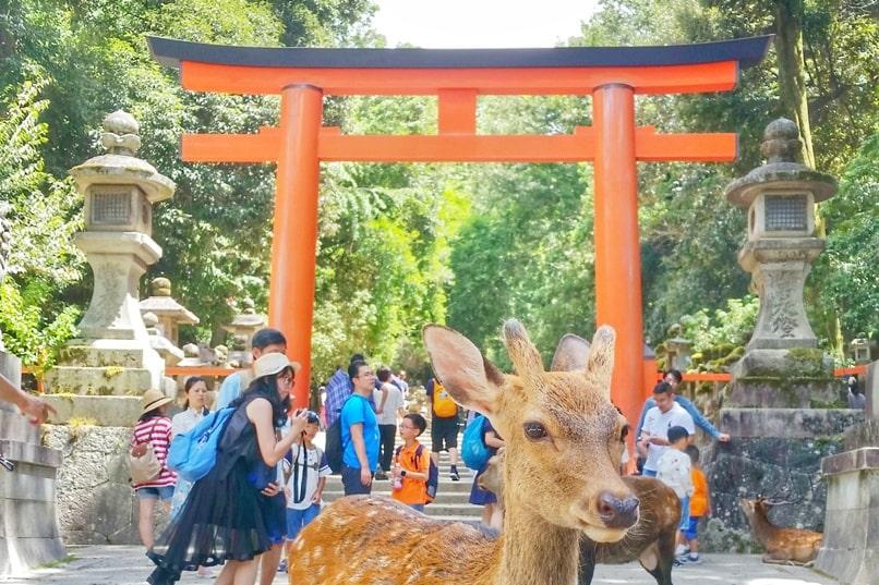 Tokyo to Nara train with JR pass. Best places to visit in Nara: Deer park to Kasuga taisha shrine. Backpacking Japan.