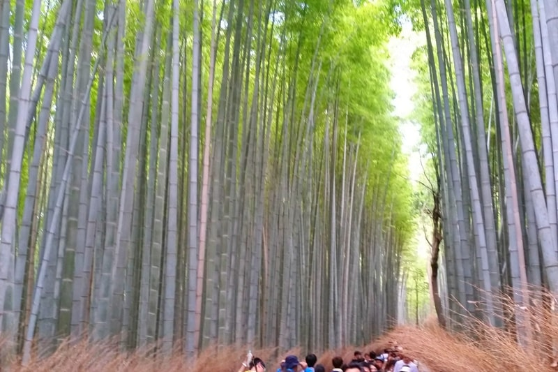 Kameoka torokko station to Arashiyama bamboo grove forest. One day in Arashiyama Sagano. Backpacking Kyoto Japan