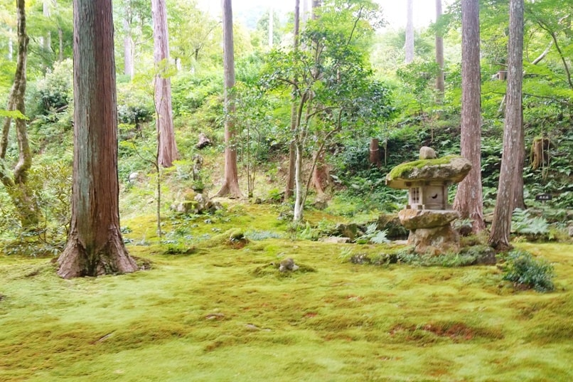 Sanzen-in Temple, Ohara, Kyoto. moss on Sanzenin Temple grounds. Backpacking Kyoto Japan