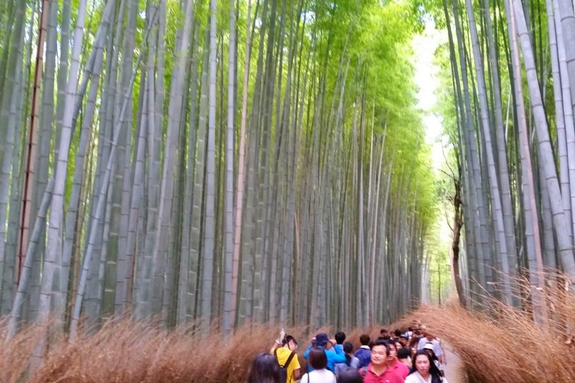 Arashiyama bamboo forest grove - when is best time to visit - afternoon crowds. pictures. Kyoto bamboo forest. Backpacking Japan