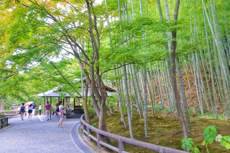 Arashiyama bamboo forest to Tenryuji temple with bamboo trees from grove - Best places to visit in one day in Arashiyama and Sagano. Backpacking Japan