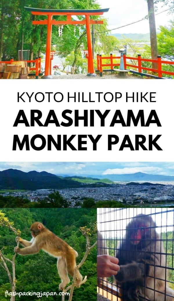 Kyoto monkey park. Arashiyama monkey park with Japanese snow monkeys in Kyoto. hike. Iwatayama. One day in Arashiyama and Sagano. Backpacking Japan travel blog