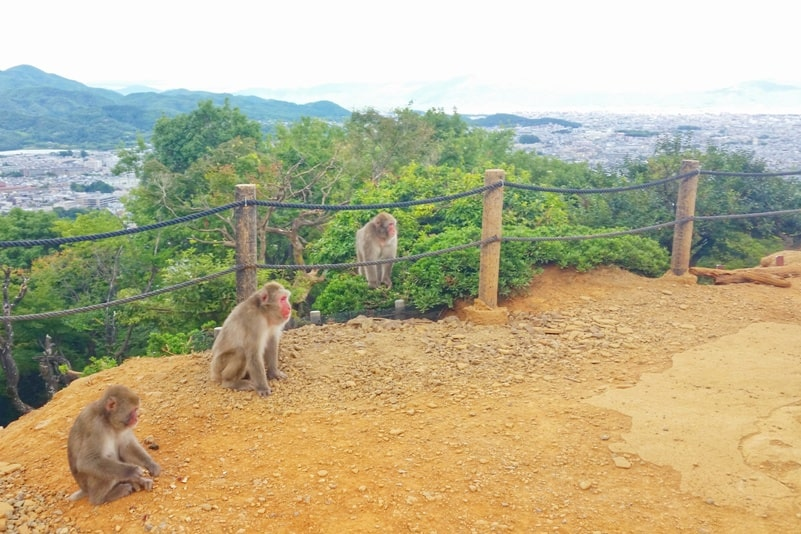 Arashiyama monkey park with Japanese snow monkeys in Kyoto. One day in Arashiyama and Sagano. Backpacking Japan travel blog