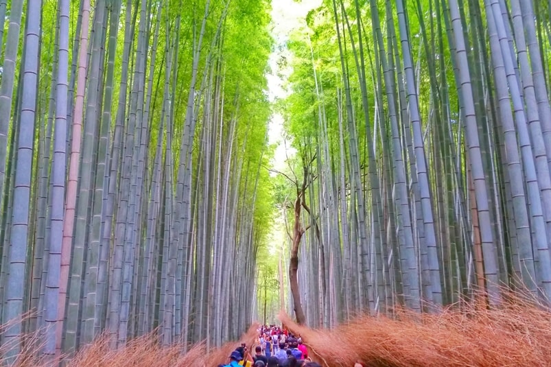 Arashiyama and Sagano - Best things to do in Arashiyama: bamboo forest grove. One day Kyoto itinerary. Backpacking Japan travel blog