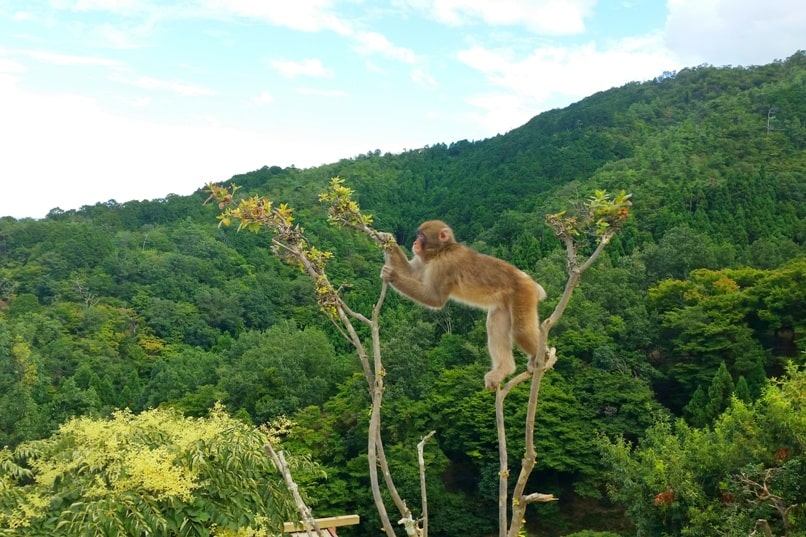 Arashiyama tourist map. Best things to do in Arashiyama in one day - How to get to monkey park, Kyoto. Backpacking Japan
