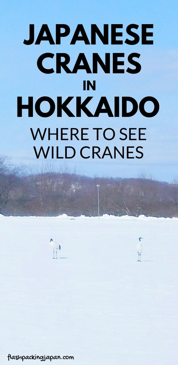 Where to see Japanese cranes in Hokkaido Japan - aka red-crowned cranes, tancho. Kayanuma train station near Kushiro with wild cranes. Backpacking Japan travel blog