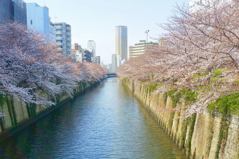 Meguro River - best cherry blossom viewing spots in Tokyo. Backpacking Japan