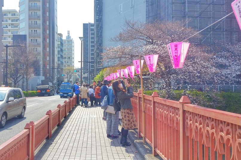 Meguro River bridge to cherry blossoms promenade viewing in Tokyo. Backpacking Japan