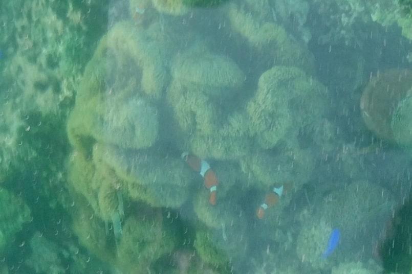 Kabira Bay, Ishigaki. Best things to do at Kabira Bay - glass bottom boat ride to find nemo. Yaeyama islands. Backpacking Okinawa Japan