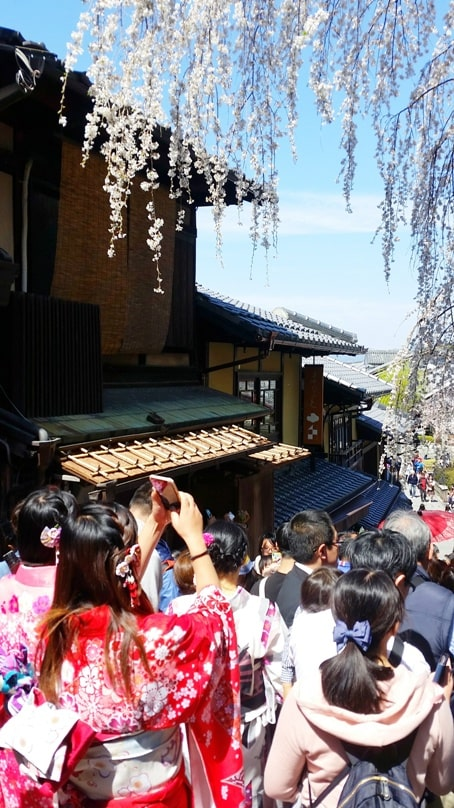 Best cherry blossom photo spots in Kyoto. Backpacking Kyoto Japan