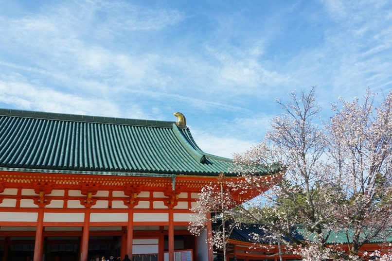 Best cherry blossom spots in Kyoto - heian shrine cherry blossom. Backpacking Kyoto Japan