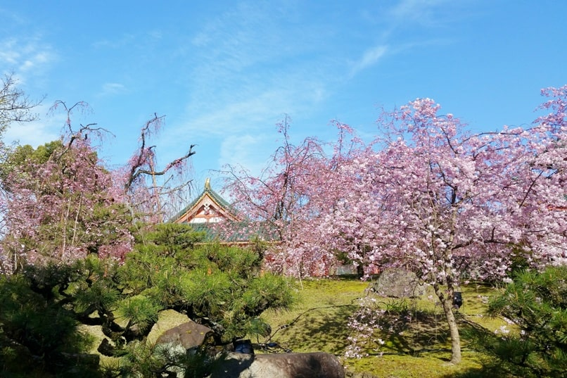 Best cherry blossom spots in Kyoto - heian shrine japanese gardens cherry blossom. Backpacking Kyoto Japan