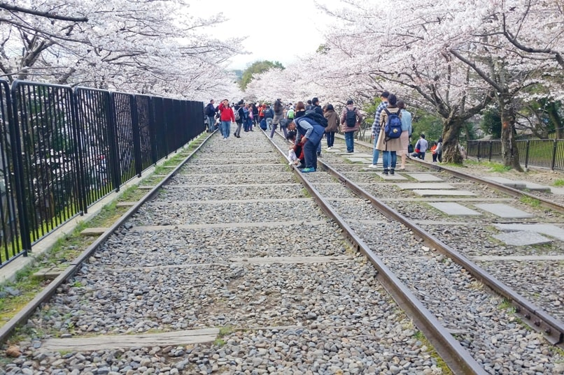 Best cherry blossom photo spots in Kyoto - keage incline cherry blossom. Backpacking Kyoto Japan