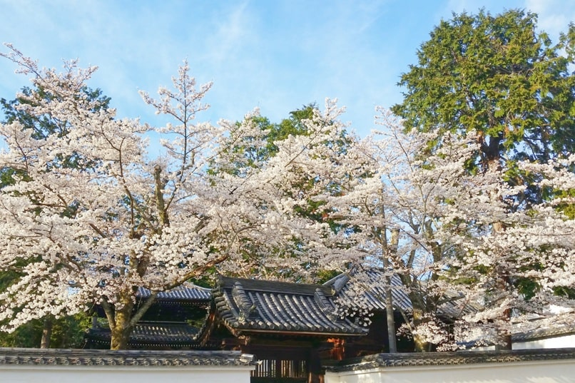 Best cherry blossom photo spots in Kyoto - keage incline to philosophers path walk. (first to nanzenji temple, then maybe to eikando temple, then to ginkakuji temple.) Backpacking Kyoto Japan