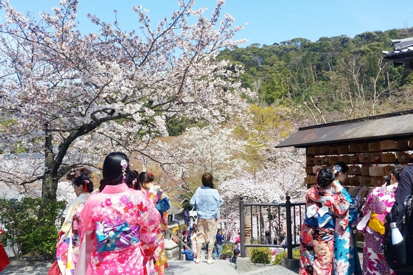 Best cherry blossom photo spots in Kyoto with kimono rental. Backpacking Kyoto Japan