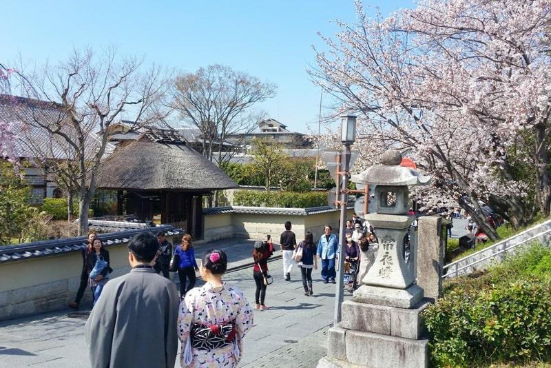 Best cherry blossom photo spots in Kyoto with kimono rental for men, boys. Backpacking Kyoto Japan
