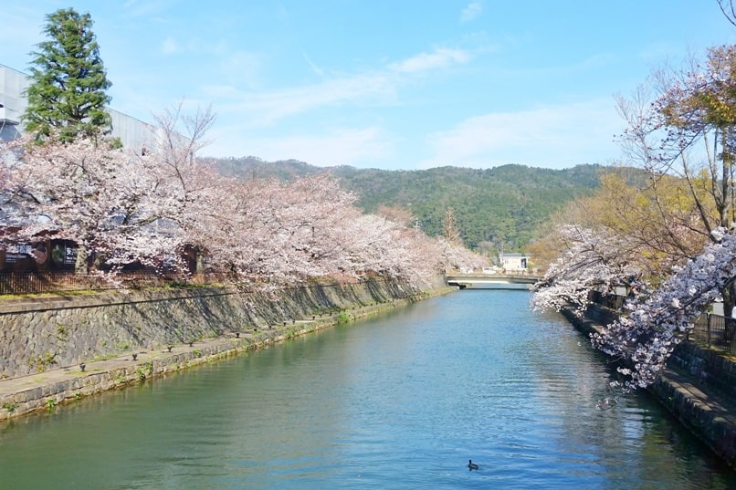 Best cherry blossom photo spots in Kyoto - lake biwa canal near heian shrine. maruyama park gion to heian shrine. Backpacking Kyoto Japan