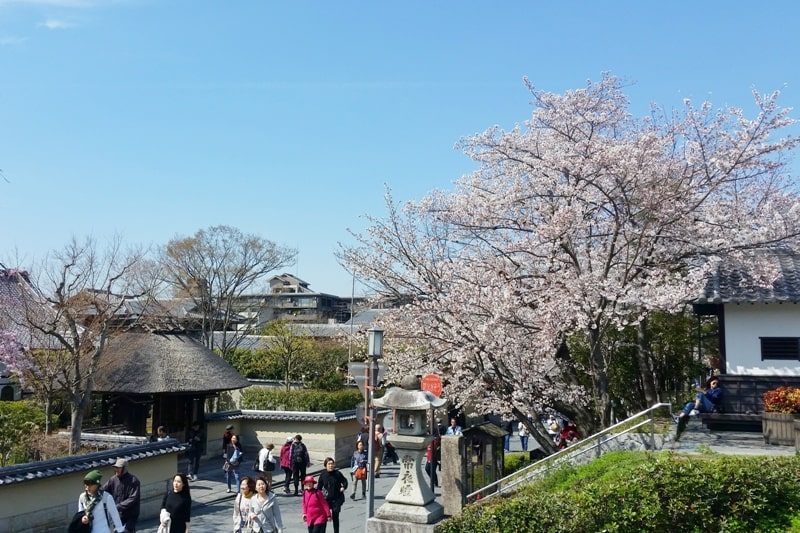 Best cherry blossom photo spots in Kyoto - kiyomizu-dera temple to maruyama park. (but first to ninenzaka, to sannenzaka, to kodaiji zen temple.) Backpacking Kyoto Japan