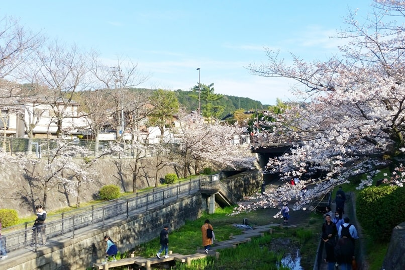 Best cherry blossom spots in Kyoto - near lake biwa canal museum to keage incline. Backpacking Kyoto Japan