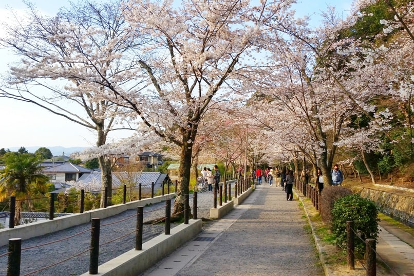 Best cherry blossom photo spots in Kyoto - philosophers path walk cherry blossom. Backpacking Kyoto Japan