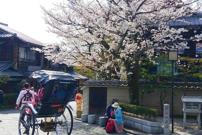 Best cherry blossom photo spots in Kyoto with rickshaw ride. Backpacking Kyoto Japan