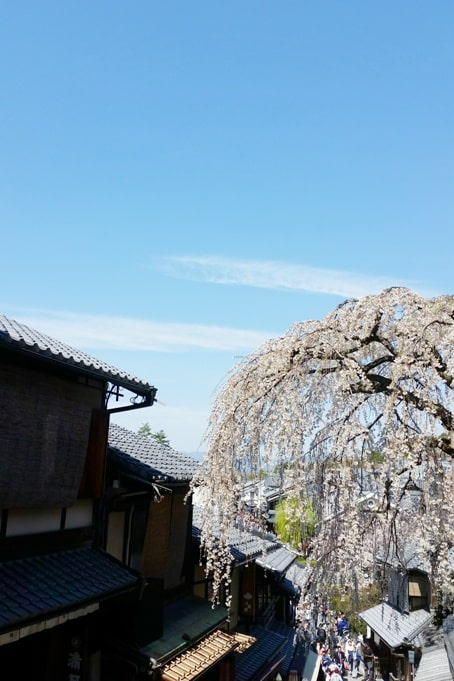 Best cherry blossom spots in Kyoto - ninenzaka sannenzaka slope cherry blossom. Backpacking Kyoto Japan