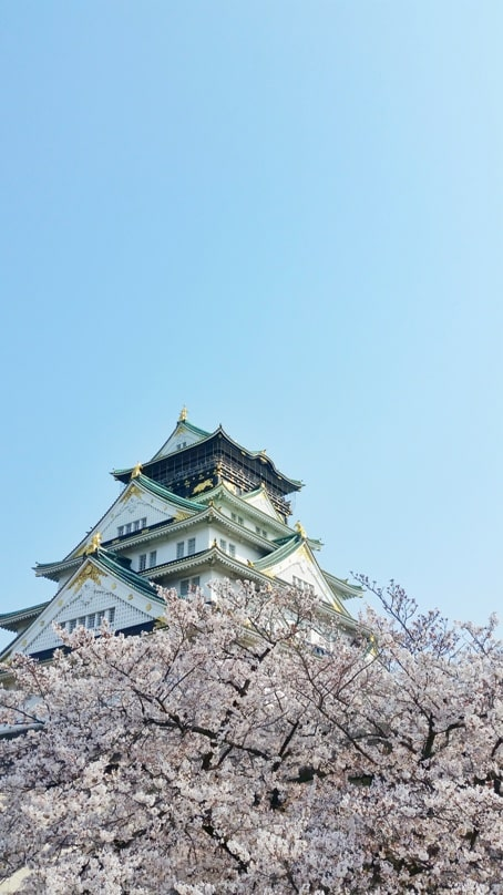 Osaka castle with cherry blossoms - best cherry blossom spots in osaka - things to do in osaka to see cherry blossoms. Backpacking Osaka Japan