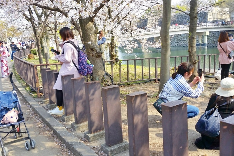 Osaka castle with cherry blossoms - best cherry blossom photo spots in osaka, instagram - things to do in osaka to see cherry blossoms. Backpacking Osaka Japan