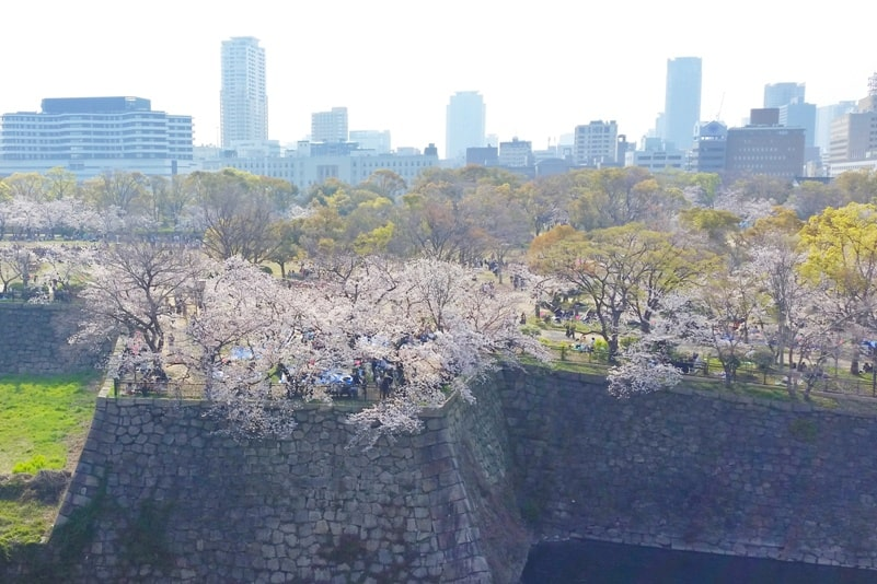 Osaka castle moat with cherry blossoms - best cherry blossom spots in osaka - things to do in osaka to see cherry blossoms. Backpacking Osaka Japan