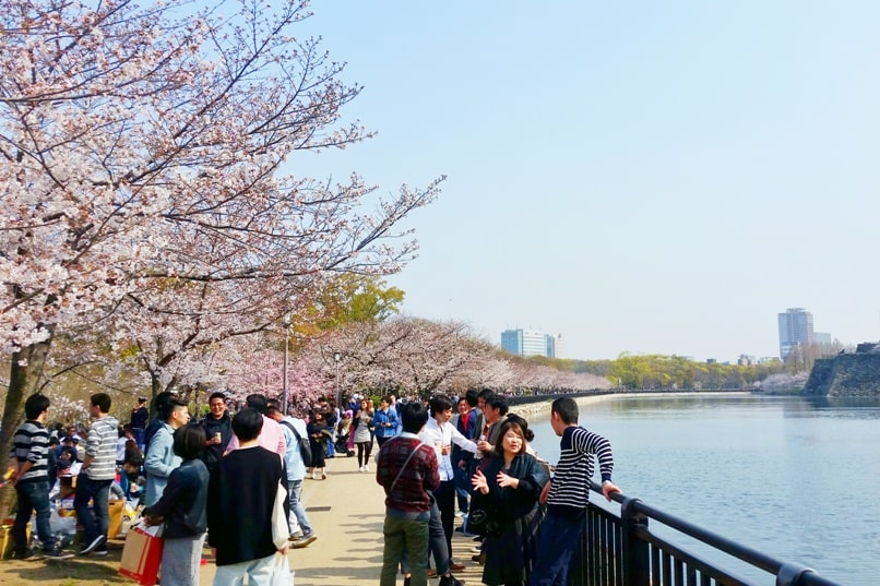 Osaka castle park with cherry blossoms - best cherry blossom spots in osaka - things to do in osaka to see cherry blossoms. Backpacking Osaka Japan