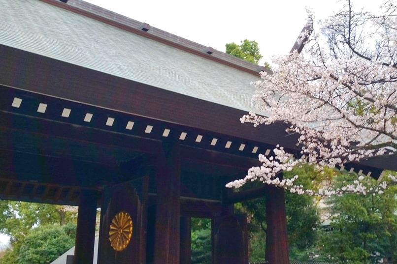 Yasukuni jinja shrine gate witih cherry blossoms in Tokyo. Backpacking Tokyo Japan