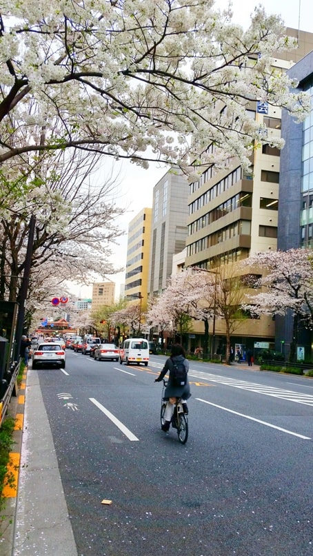 Cherry blossom walk in Tokyo to get to Yasukuni shrine. bicycle. Backpacking Tokyo Japan