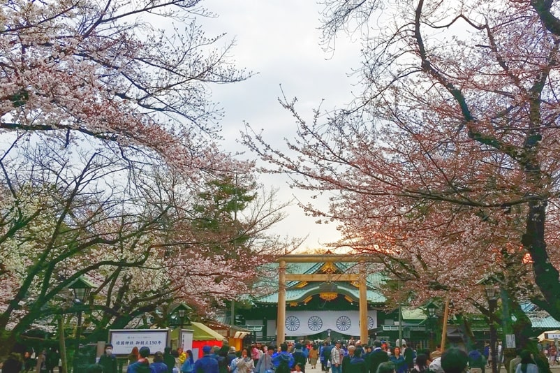 Yasukuni shrine with cherry blossoms in Tokyo. things to do in chiyoda to see cherry blossoms. Backpacking Tokyo Japan
