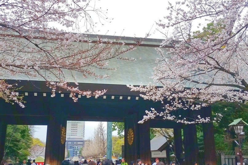 Yasukuni shrine gate with cherry blossoms in Tokyo. things to do in chiyoda to see cherry blossoms. Backpacking Tokyo Japan
