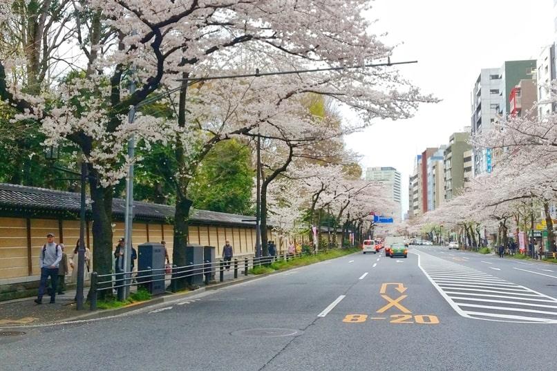 Near Yasukuni shrine - cherry blossom walk in Tokyo. Backpacking Tokyo Japan