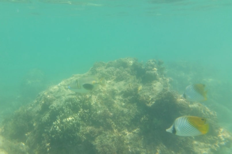 Snorkeling in Ishigaki Okinawa - Best snorkling spots in Ishigaki at Yonehara Beach, Yaeyama islands. Backpacking Japan
