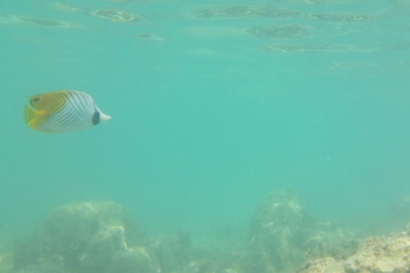 Snorkeling in Ishigaki Okinawa - Best snorkling spots in Ishigaki at Yonehara Beach. Backpacking Japan travel blog