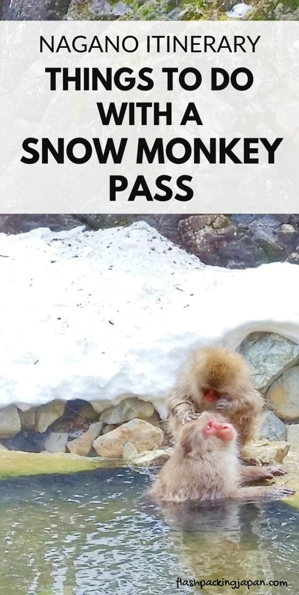Snow monkey pass for Jigokudani monkey park from Nagano by bus or train. Best things to do in Nagano in 2 days. best places to visit in Nagano. Backpacking Japan travel blog