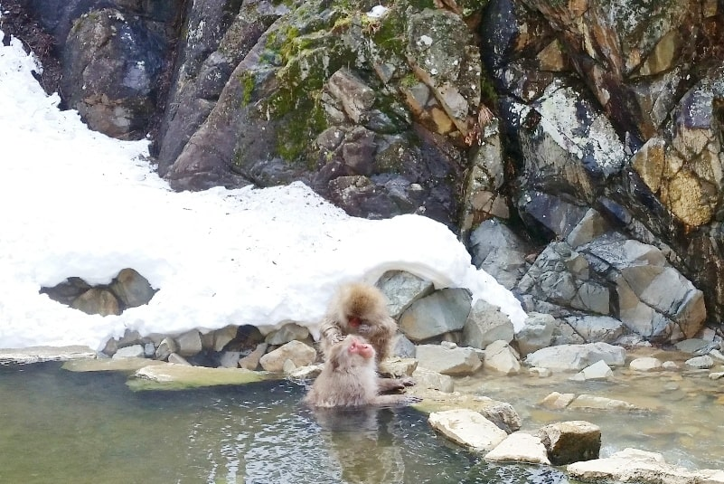 Going to Jigokudani monkey park with Snow Monkey Pass. 2 day Nagano winter itinerary with snow. Backpacking Japan travel blog