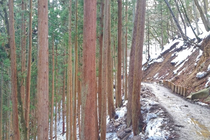 Walk to get to Jigokudani monkey park trail from bus stop. 2 day Nagano winter itinerary with snow monkey pass. Backpacking Japan travel blog