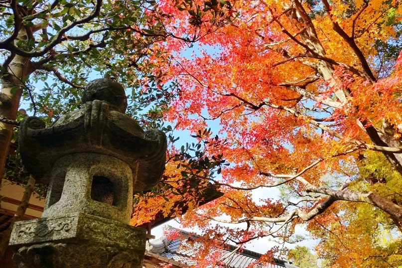 Autumn in Kyoto Japan. Best places to visit in Kyoto for fall foliage colors. Honen-in Temple, philosopher's path walk. October, November, December. koyo momiji photos spots. red orange yellow. Kyoto Japan travel blog