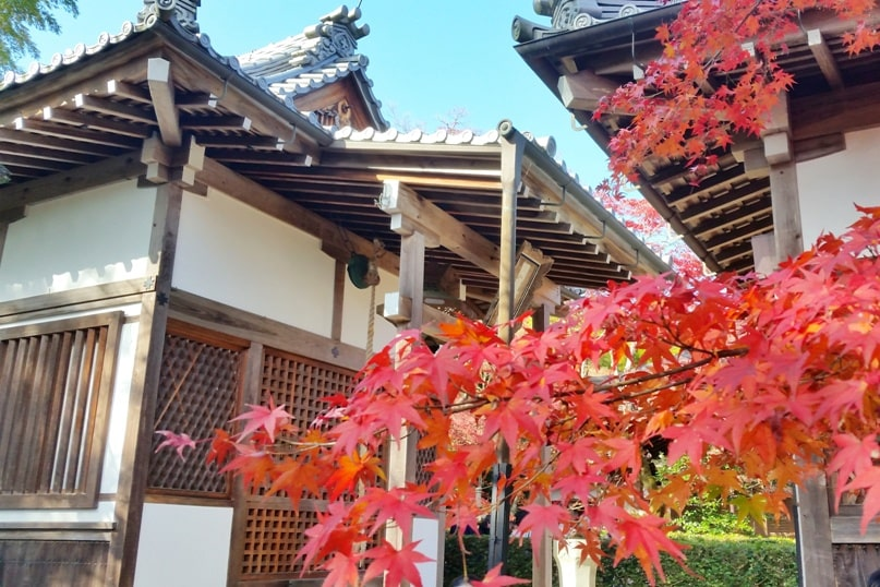 Autumn in Kyoto Japan. Best places to visit in Kyoto for fall foliage colors. jojakkoji temple, arashiyama. October, November, December. koyo momiji photos spots. red orange yellow. Kyoto Japan travel blog