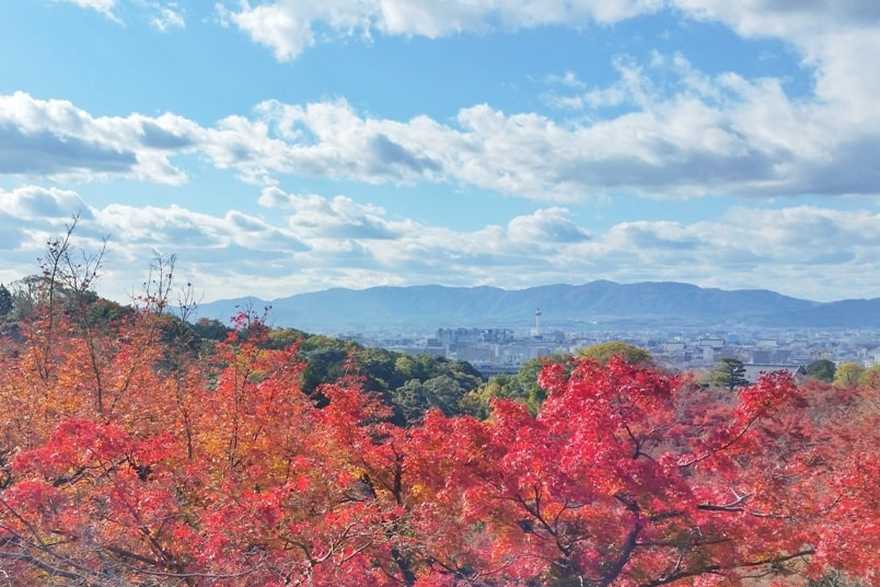 Autumn in Kyoto Japan. peak season for fall foliage colors. mountains. what months is season. crowds. October, November, December. koyo momiji photos spots. red orange yellow. Kyoto Japan travel blog