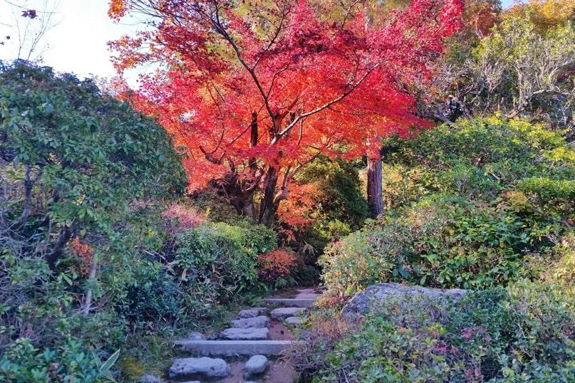 Okochi Sanso villa garden for autumn fall foliage colors in Arashiyama Kyoto in October, November, December. red orange yellow. Backpacking Japan travel blog